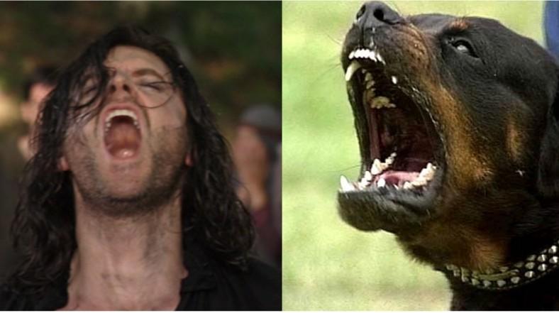 Guy of Gisborne Rottweiler