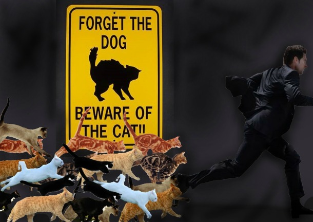 Beware of the cats Richard Armitage_edytowany-1